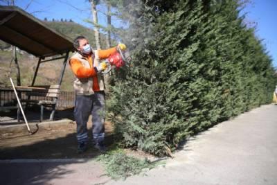 Ağaç Budama ve Bakım Çalışması Gerçekleştiriyoruz